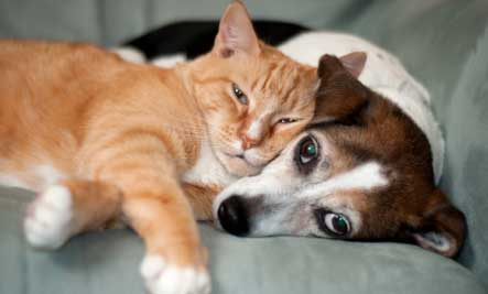 cats-dogs-snuggling-12072011-29