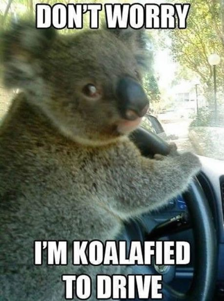 driving-meme
